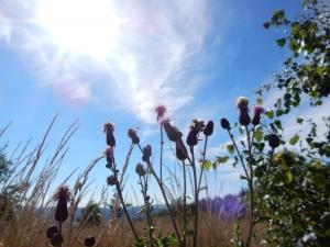 Blik omhoog naar de lucht en de zon vanuit het gras met mooie bloemen.