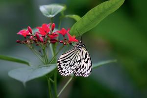 mijndrukker.nl Fotoboek Ep de Ruiter NATUURLIJK vlindertuin Artis Ronald Boiten Boekprojecten
